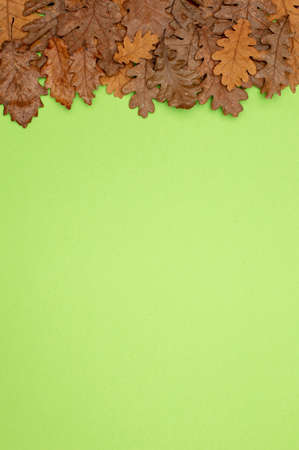 Autumn Still Life. Set of dried leaves on a light green surface. View from above. 版權商用圖片