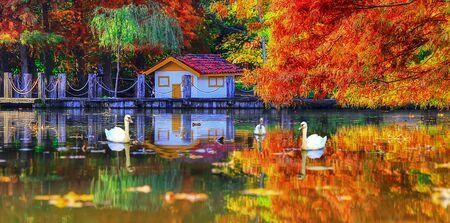 Autumn forest trees. Istanbul Turkey