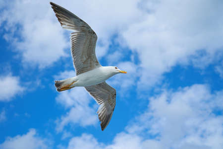 Seagull flying on the blue sky