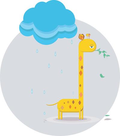 chewing: sad giraffe chewing on a twig in the rain