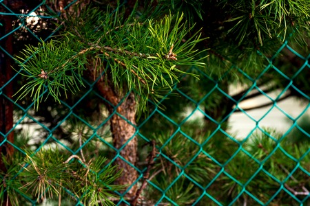 lush green tree branches growing over a fence
