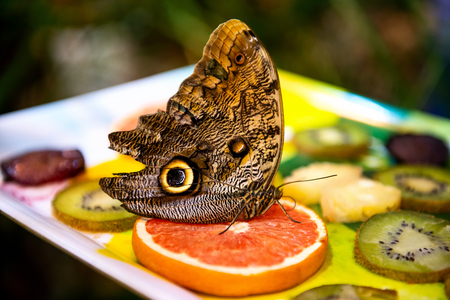 beautiful big butterfly sitting on bright fruits on blurred background