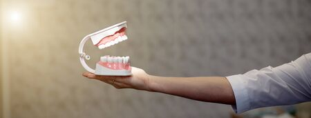 reception in the office of the dentist, the doctor shows the training jaw Stock Photo