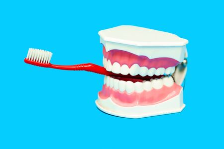 the toothbrush is inserted into the mouth of the medical model of the jaw, like a Smoking tube on a blue background