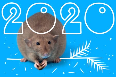 new year greeting card with 2020 year. Rat sitting on blue background. Painted a sprig of Holly and calendar year.