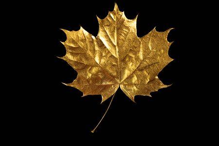 autumn Golden maple leaf on black background
