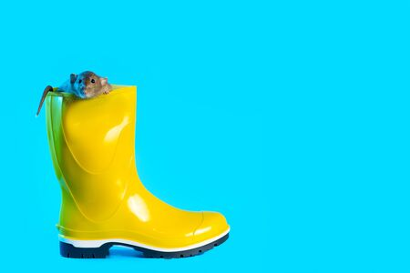decorative rat in bright yellow rubber boot on a blue background. Symbolizes the coming autumn and the year of the Rat
