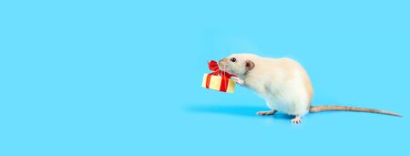 cute decorative rat with cheese gift and red bow on blue background Stock Photo
