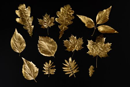 autumn composition of different Golden leaves on black background