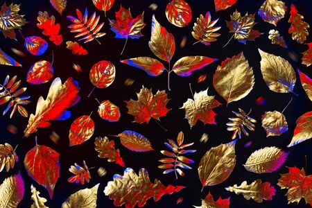 open composition of different Golden autumn leaves in neon light on black background Stock Photo