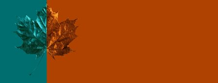 composition of maple leaf on colored background
