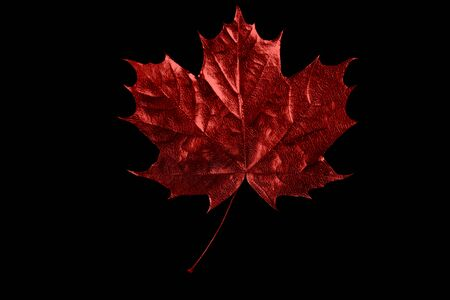 autumn red maple leaf on a black background Zdjęcie Seryjne - 133459571
