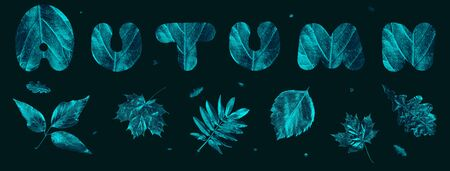 autumn composition of different leaves and letters on black background