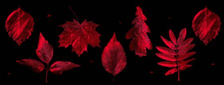 autumn composition of different leaves and letters on black background Zdjęcie Seryjne - 133459575