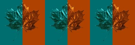 composition of maple leaf on colored background Zdjęcie Seryjne - 133460410