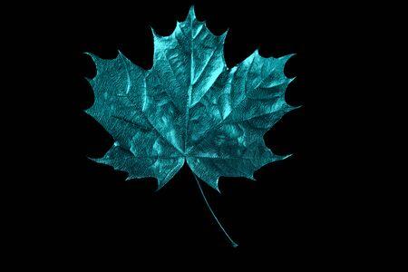 autumn mint maple leaf on a black background Zdjęcie Seryjne