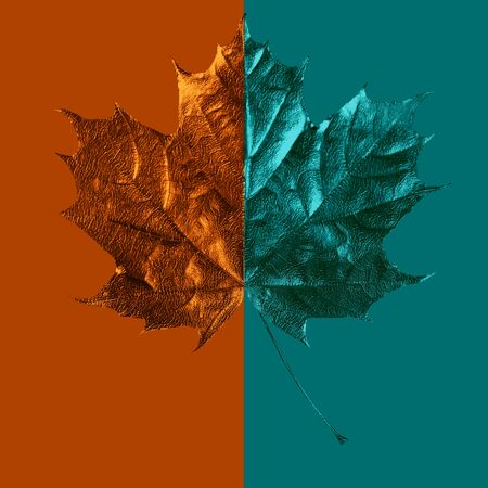 composition of maple leaf on colored background Zdjęcie Seryjne - 133460416