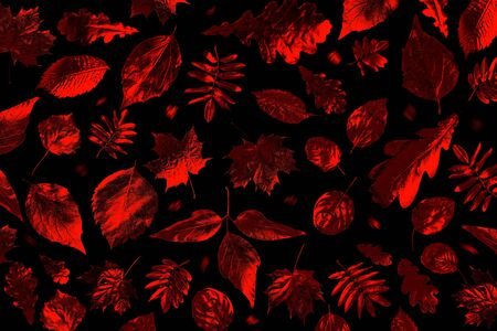 open composition of different autumn leaves in neon light on a black background Zdjęcie Seryjne - 133460436