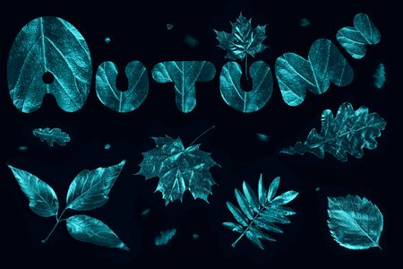 autumn composition of different mint leaves and letters on a black background Zdjęcie Seryjne - 133460443