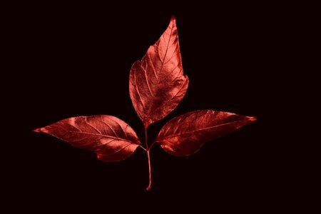 autumn composition of different red leaves and letters on a black background Zdjęcie Seryjne