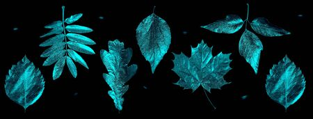 autumn composition of different leaves and letters on a black background Zdjęcie Seryjne - 133459779