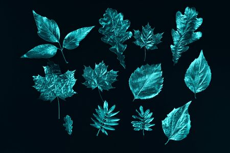 autumn composition of different mint leaves on black background Zdjęcie Seryjne - 133459783