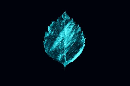 autumn composition of different mint leaves and letters on a black background