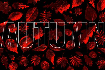 open composition of different Golden autumn leaves in neon light on black background Zdjęcie Seryjne