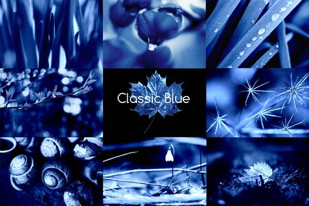 Classic Blue. Color of the Year 2020. A collage of natural macro photos.