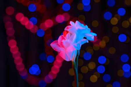 White flower fresia lit by neon. In the background are multicolored sides. The concept for Valentine's Day. Stock fotó