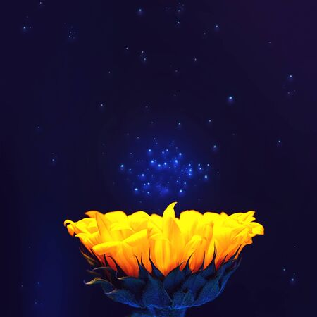 Bright yellow sunflower. Against the backdrop of space and stardust. Copy space.