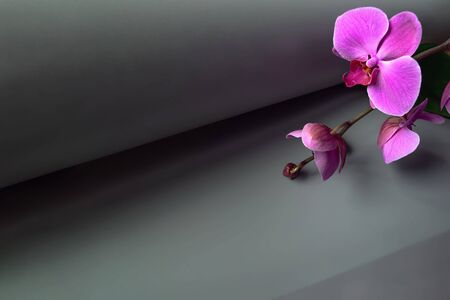 Geometric composition with pink orchid on a gray background. Rolled paper roll in perspective. Copy space