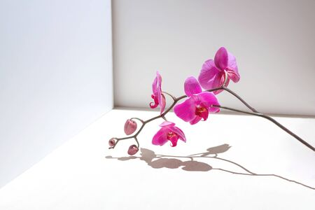 Geometric composition with pink orchid on a white background. Angles, shadows and perspective in the frame.