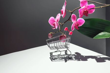 Geometric composition with pink orchid and a shopping basket on a gray background. Concept on the theme of the flower shop. Copy space