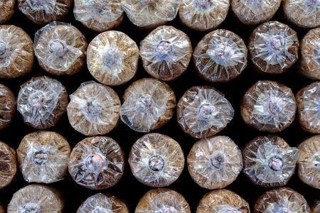 mushroom cultivate in house