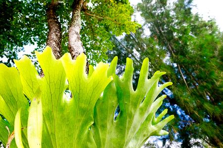 Fresh green fern on tree close up