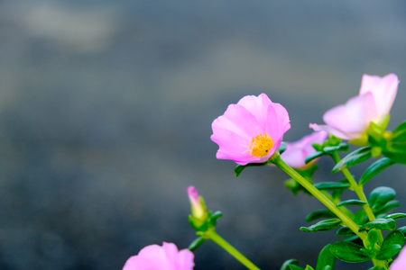Pink flower selectived focus with blur background Stock Photo