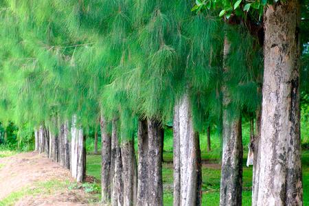 Tree forest Reklamní fotografie