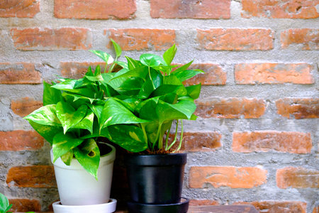 small plant in pot and masonry background
