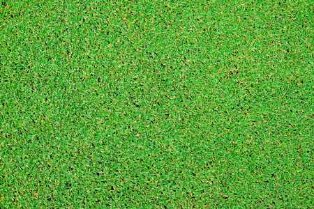 Green grass texture from golf field Stockfoto