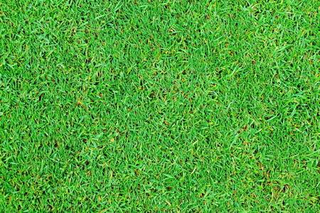 Perfect green grass texture from golf field