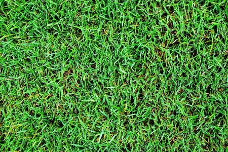 Green grass texture Banco de Imagens