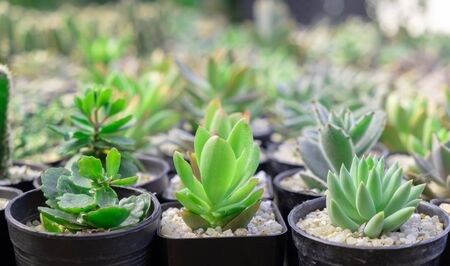 image of of succulent cactus plants  in a pot selective focus