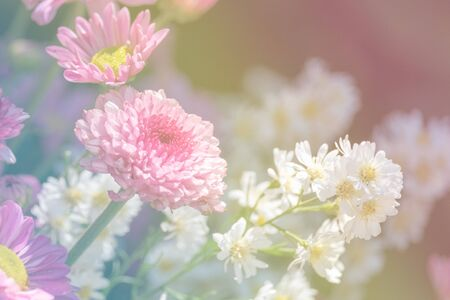 Flower blooming in pastel color style for background and backdrop use. Reklamní fotografie - 136857953