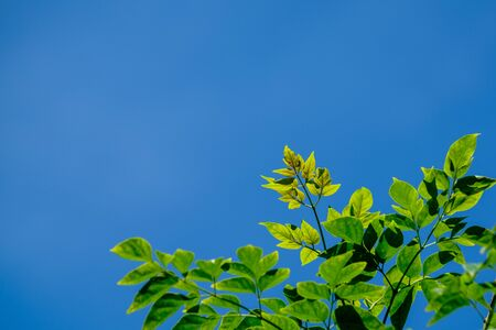 green leaf with sky background for copy space