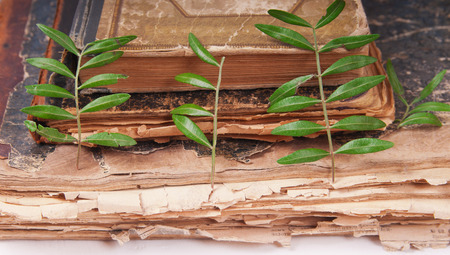 Dried flowers and leaves on old books photo