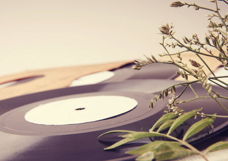 Vintage vinyl records in envelopes and dried flowers on a light table photo