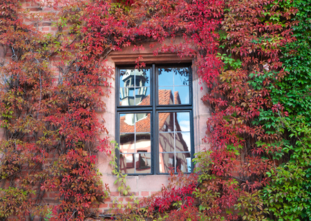 Reflection of the ancient house in the window on the wall , ivy-covered photo