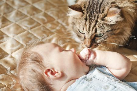 curiously: pet cat curiously looking at newborn