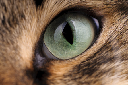 Green cat eyes close up Foto de archivo